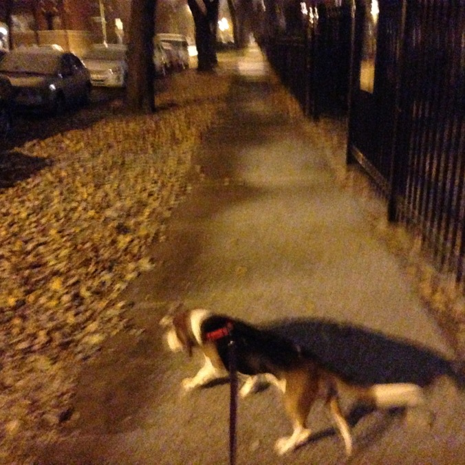 Ernie Walking in Logan Square, Late Fall - Chicago Pizza Hound
